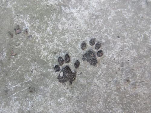 ワンちゃん、ネコちゃんのコンクリ足跡。