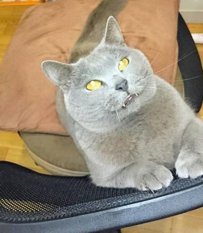 わが家のネコちゃん、シャリュトリュー。