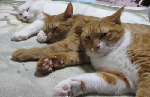 わが家の愛猫3匹。