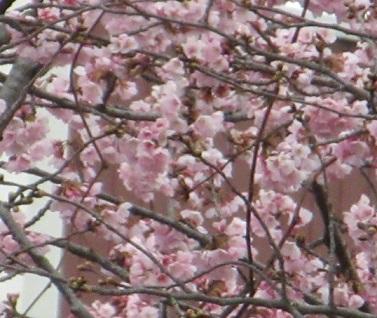 春はすぐそこまで…。