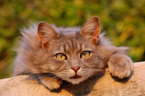 猫によくみられる目の病気の網膜疾患