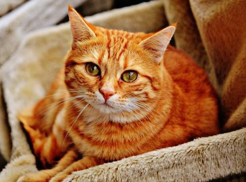 猫でよくみられる目の病気の網膜疾患