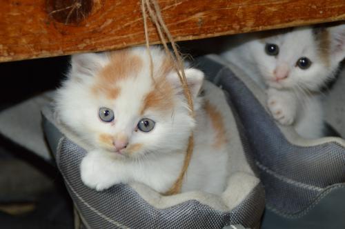 猫でよくみられる目の病気