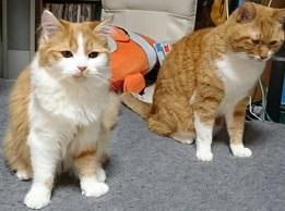 猫ちゃん、いつも癒されてます…。