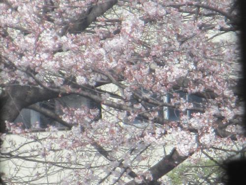 埼玉北部、群馬東部の4月、格安のゴミ片付けチャンスです。