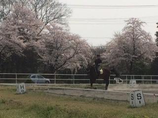 お花見乗馬