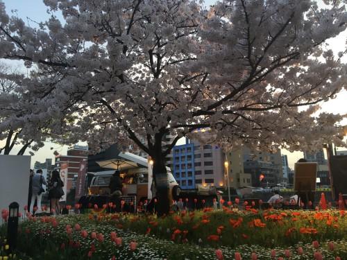 福岡市中心部の桜レポート②
