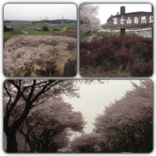 芳賀町には桜の名所がありますね。