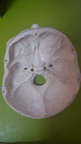 新丸子・武蔵小杉 整体による花粉症対策 脳と副腎