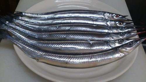 今「旬」茨城県産身が引き締まった綺麗なサヨリは刺身が一番