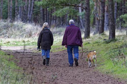 高齢動物の散歩について
