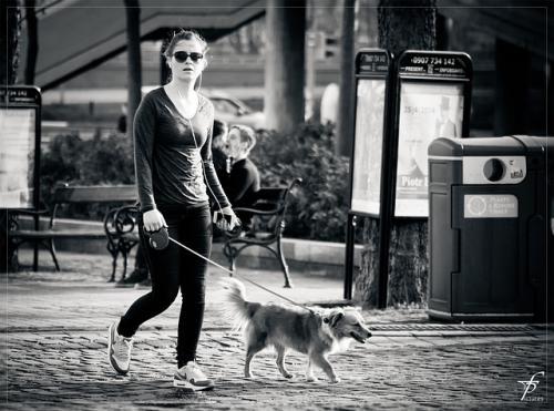 高齢動物の散歩についての続き