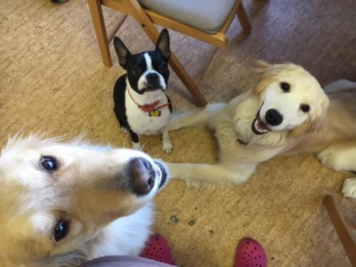 オランダの犬事情から日本を見てみる