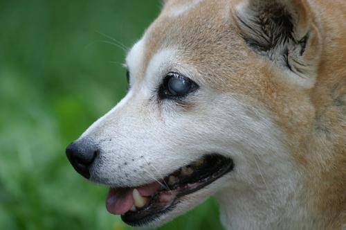 高齢動物と感覚器官