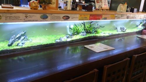 友部駅周辺で昼ごはん熱帯魚を眺めながらカフェ感覚のランチ