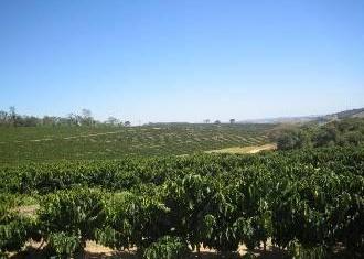 コーヒー産地『ブラジル』