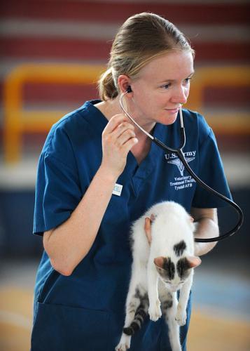 犬、猫の耳の検査