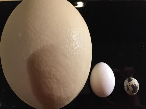 居酒屋三日月  ダチョウの卵入荷!