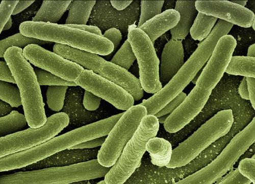 耳道の細菌感染が緑膿菌の時