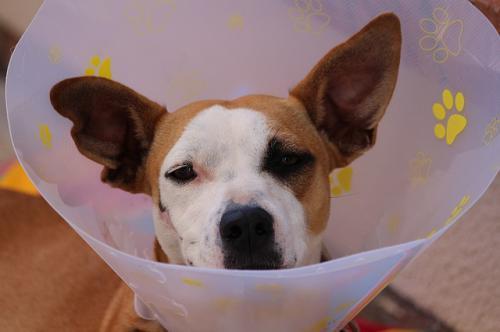 耳の外科的治療について