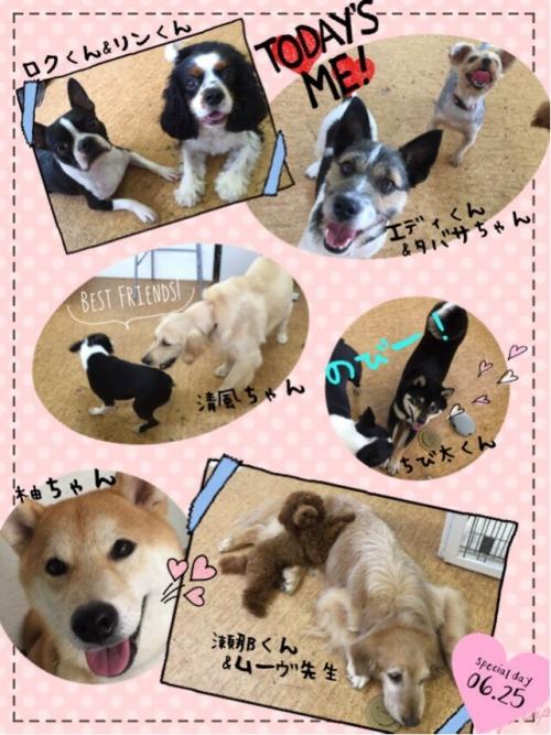 カナダの犬事情から日本を見てみる