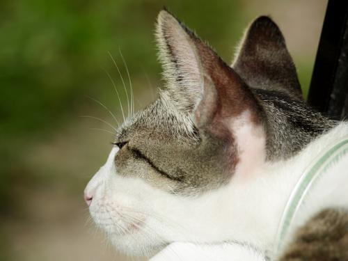 耳介にできる腫瘍の繊維肉腫
