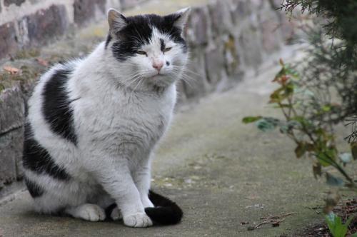 猫の老化について