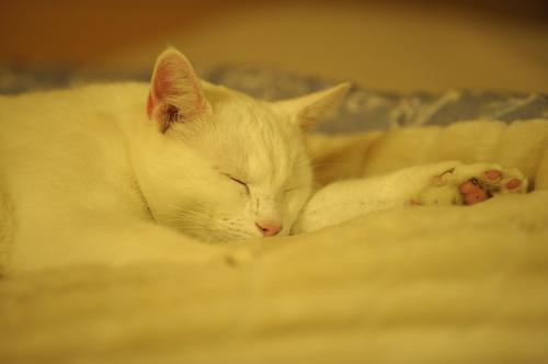 猫の老化に伴う一般的な変化
