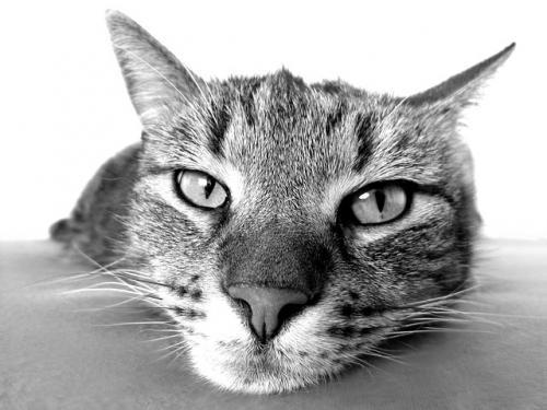 猫の老化に伴う一般的な変化2
