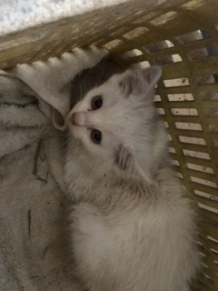迷子の迷子の子猫ちゃん