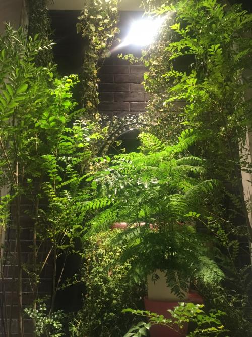 お休み前に 観葉植物