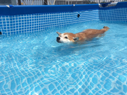 熱中症はプールで回避しよう