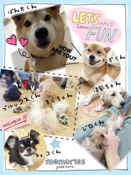 ブラジルの犬事情から日本を見てみる