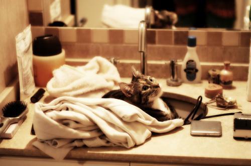 猫の特発性膀胱炎とトイレのしつけ