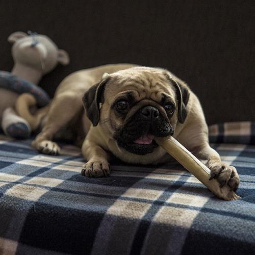 犬猫の攻撃行動の誘発刺激への脱感作について
