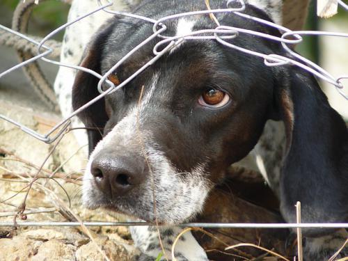 犬猫の不安、恐怖症の治療