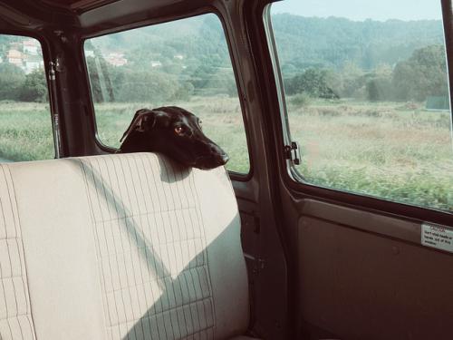 車に乗ると不安、恐怖症になる場合