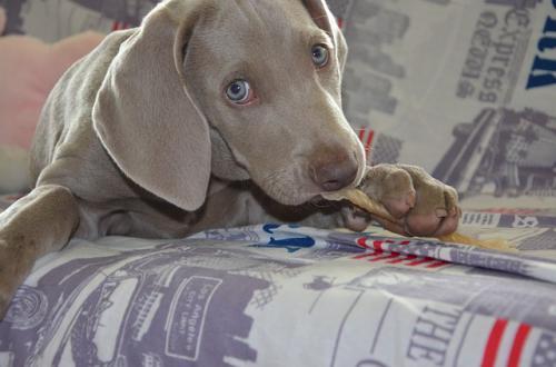 犬の分離不安症の対応