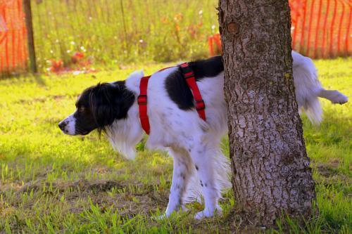 犬の排泄行動による問題行動