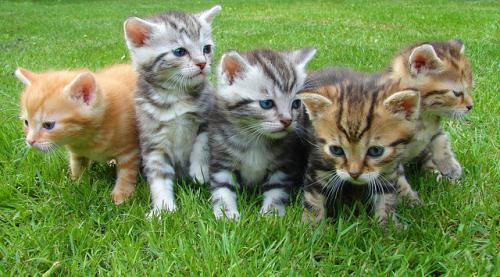 猫の排泄による問題行動