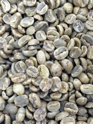 エクアドル《グレートマウンテン》コーヒー