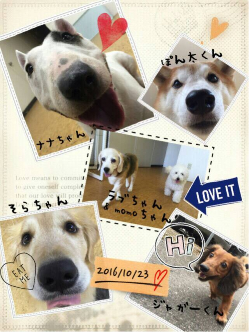 クロアチアの犬事情から日本を見てみる