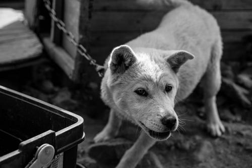 犬の問題行動を負を罰する難しさ
