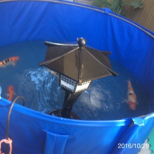 池のリフォーム 名古屋、