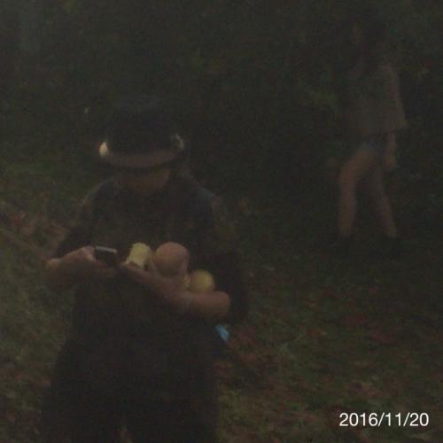 エイコウホームりんご狩り