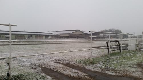 降雪記録!