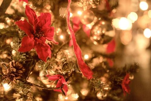 クリスマスがいよいよやってくる!浮気予報を大胆予想
