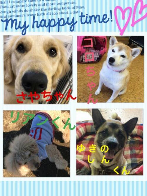 イギリスの犬事情から日本を見てみる