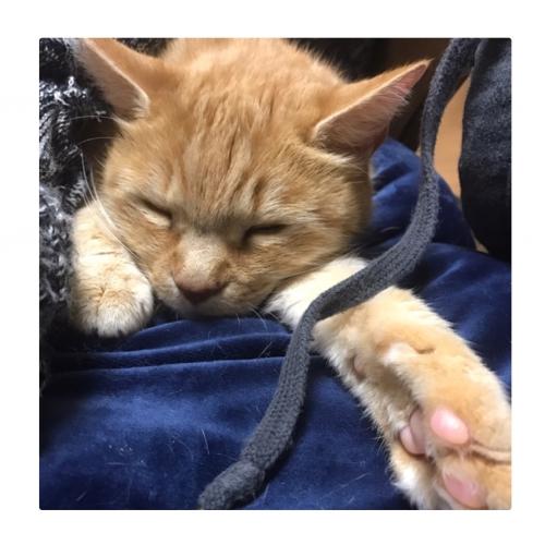子猫みたいな寝顔