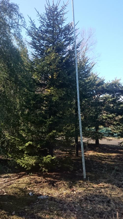 材料検査~樹木を見に行ってきました~